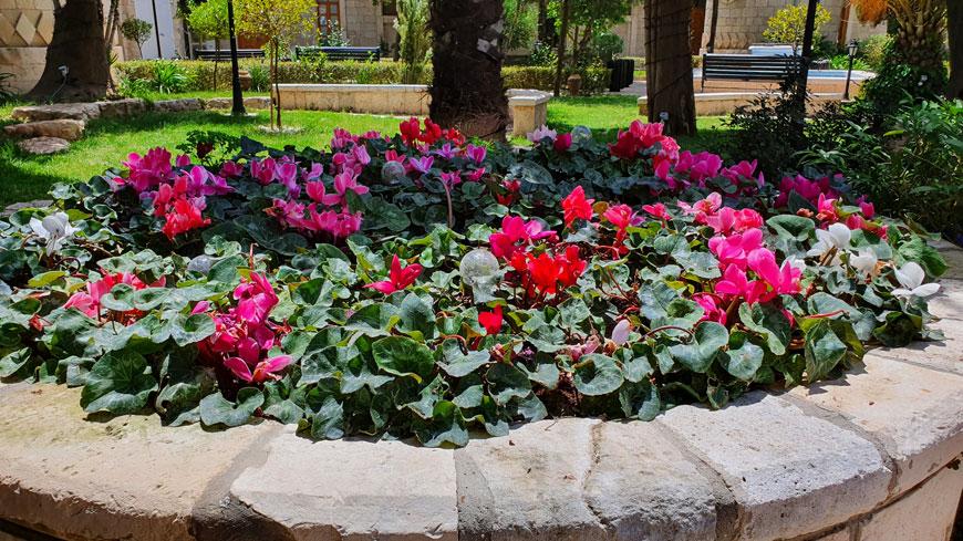«Сады подворья» на Сергиевском подворье в Иерусалиме